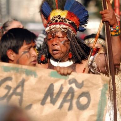 dyreliv i brasil og amazonas